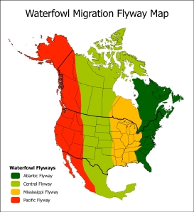 Flyways_Map